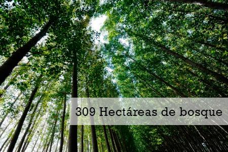 Hectarias de bosque